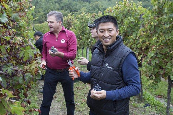 Briški vinogradniki so osvojili zadržane Kitajce
