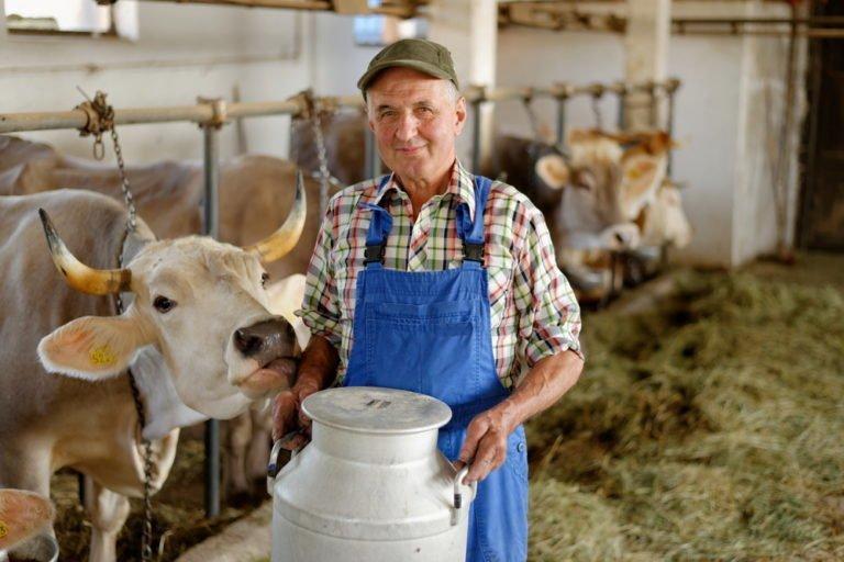 7 načinov predelave mleka
